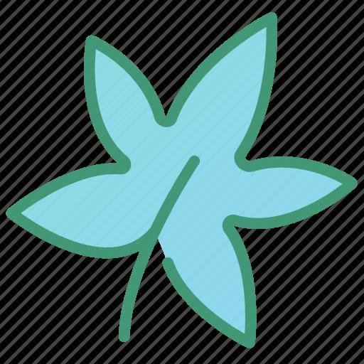 botanic, foliage, leaf, maple, plant icon