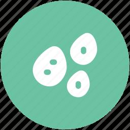 nuts, oak, peas, seeds, spherical green, vegetable icon