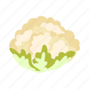 cabbage, cauliflower, color, cooking, food, vegetable icon