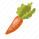 carrot, color, food, vegetable, root, vegan