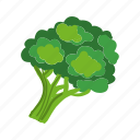 broccoli, cabbage, cooking, food, vegetable, green, healthy