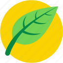 ecology symbol, foliage, leaf, spinach, spinach leaf icon
