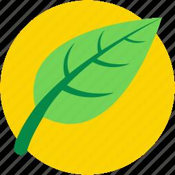 ecology symbol, foliage, leaf, spinach, spinach leaf icon