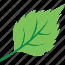 leaf, spinach leaf, ecology symbol, spinach, foliage icon