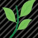 artichoke, diet, food, nutrition, vegetable icon