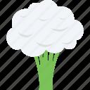 brassicaceae vegetable, cauliflower, diet, healthy diet, vegetable icon