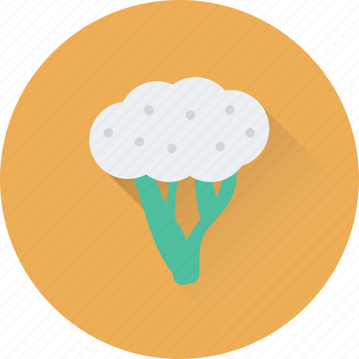 cauliflower, diet, food, healthy, vegetable icon