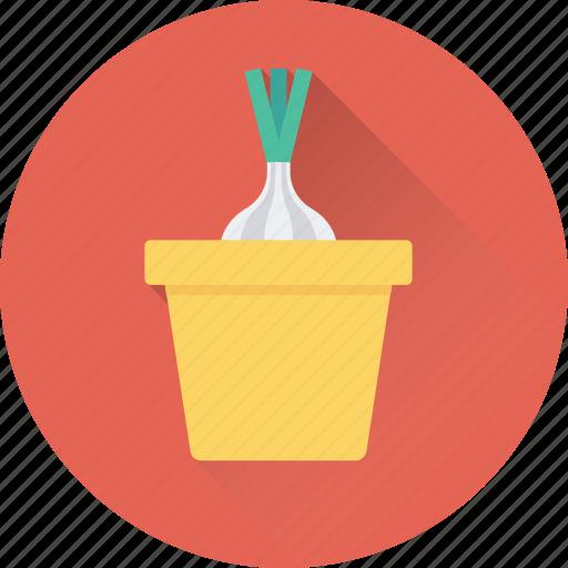 allium sativum, food, garlic, spice, vegetable icon