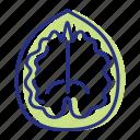 allergen, tree nut, walnut icon