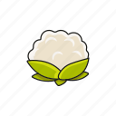 cabbage, food, salad, vegetable icon icon