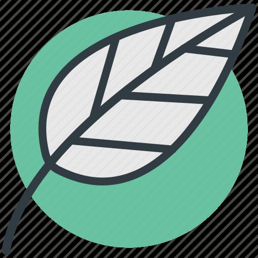 foliage, greenery, leaf, leafage, nature icon