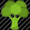 broccoli, food, green, healthy, meal, vegetable, vegetarian
