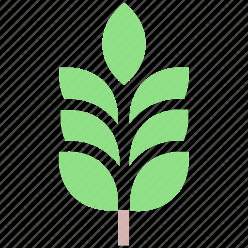 agriculture, cereal grain, food, grain, grain ear, wheat icon