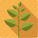 food, green, herb, ingredient, mint, plant icon