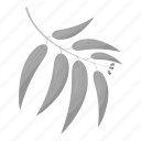 branch, ecology, forest, leaves, nature, willow icon