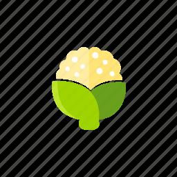 cauliflower, food, fresh, organic, vegetable, vegetarian icon