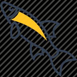 animal, common, fish, nase icon