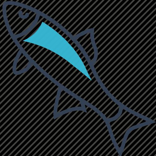 animal, fish, roach icon