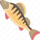 animal, fish, freshwater, river icon