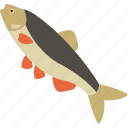 animal, fish, food, freshwater icon