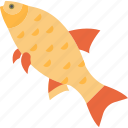 carp, fish, food, freshwater, gold, lough icon
