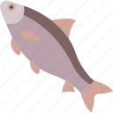 crucian, fish, freshwater, river icon