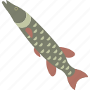 fish, freshwater, pike, river icon