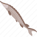fish, freshwater, river, zander icon