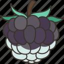 blackberry, mulberry, fruits, vitamin, antioxidant