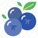 blueberries, blueberry, fresh, fruit icon