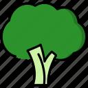vegetable, leaf, green, broccoli, tree