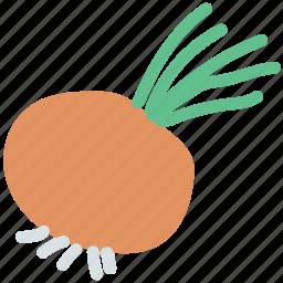 food, fresh, rutabaga, swede, swedish turnip, turnip, vegetable, white icon