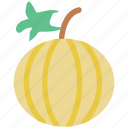cantaloupe melon, food, fresh, fruit, melon icon