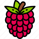 eating, food, fruit, health, raspberry icon