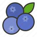 blueberry, fruits, food, fruit, health