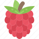 eating, food, fruit, health, raspberry