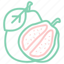 fruit, fruits, guava, megan icon