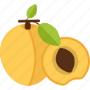 apricot, food, fruits, lobule, ossicle icon