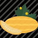 food, fruits, melon, sheet icon
