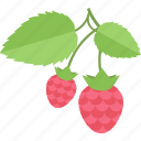 food, fruits, raspberry, sheet icon