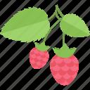 food, fruits, raspberry, sheet