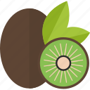 coconut, food, fruits, sheet icon