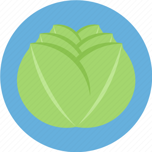 cabbage, greenvegetable, vegetable icon