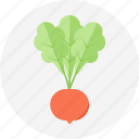 radish, vegetable icon