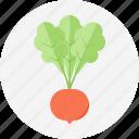 radish, vegetable