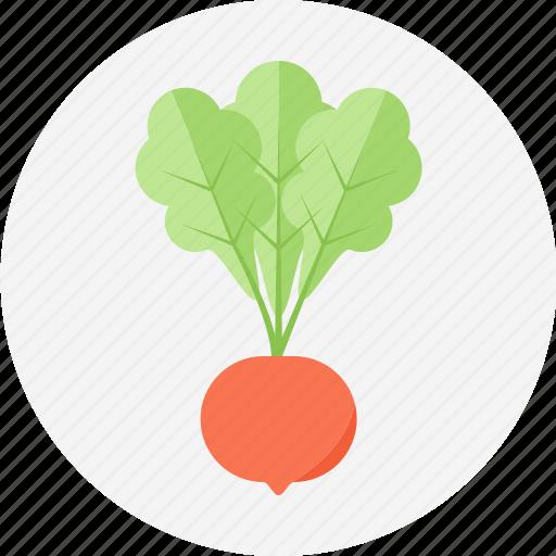 radish, vegetable icon
