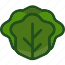 cabbage, food, lettuce, plant, vegetable icon