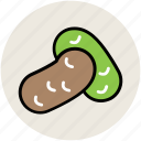 bean, bean food, diet, food, plant seed icon