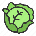 agriculture, cabbage, crop, food icon