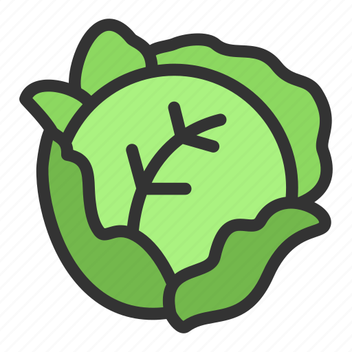 Cabbage, crop, food, agriculture icon